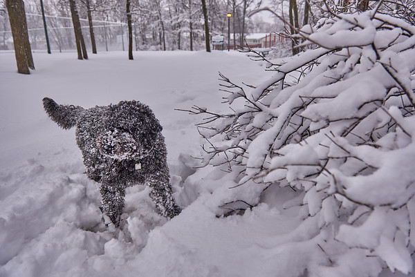 French snow dog