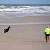 Local exercising his dog  in a novel way on beach near Bundaberg.
