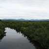 View from the bridge over Riviere Bergeron on Rt 263, looking into the low swampy area. Google Maps can help you find this place.