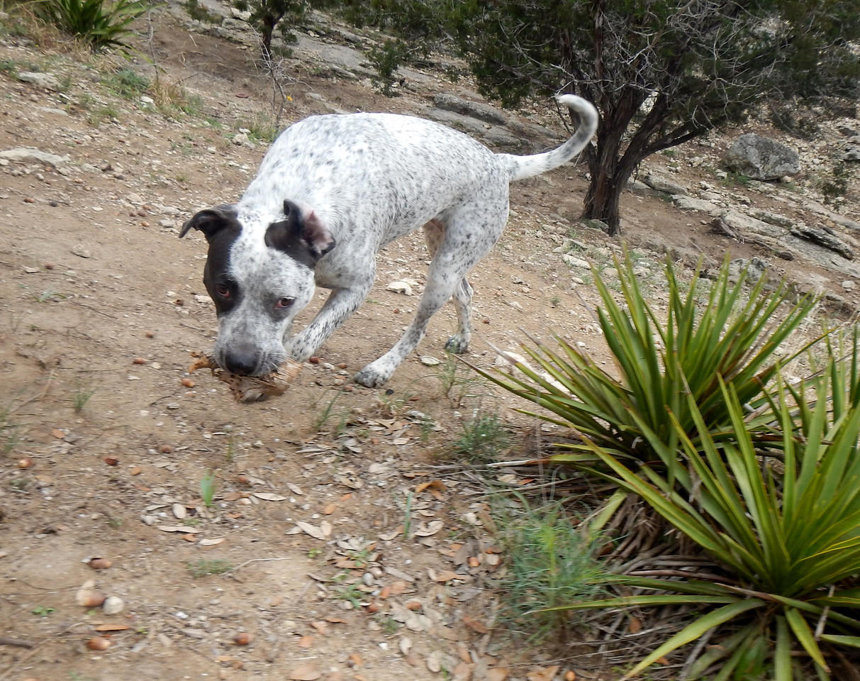 Budra found a stick
