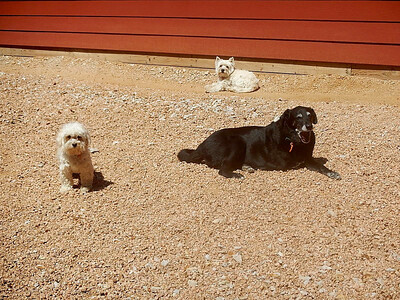 Roux, Beignet and Sophie D  relaxing in the sun