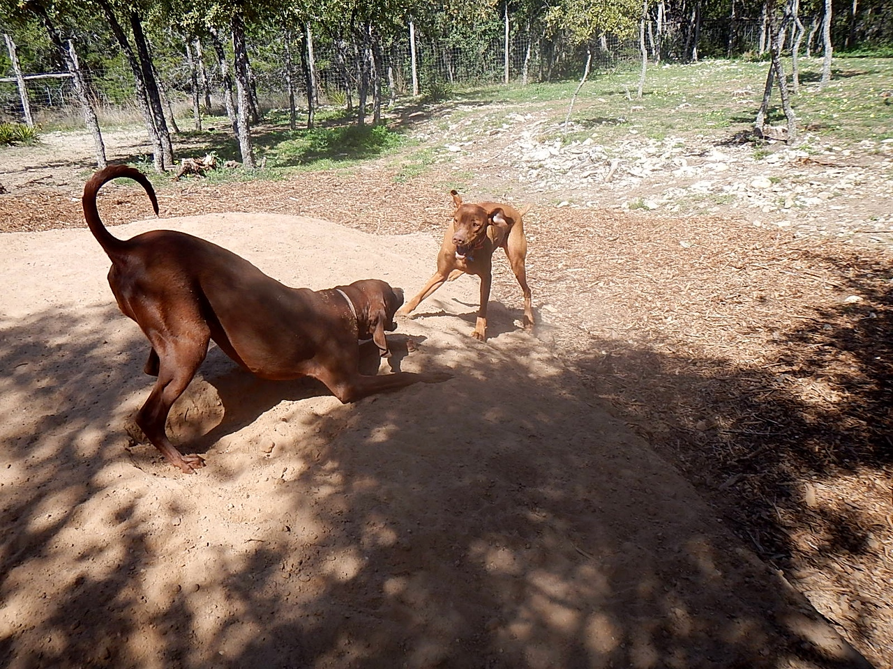 Teak and Ellee Mae playing in the sand