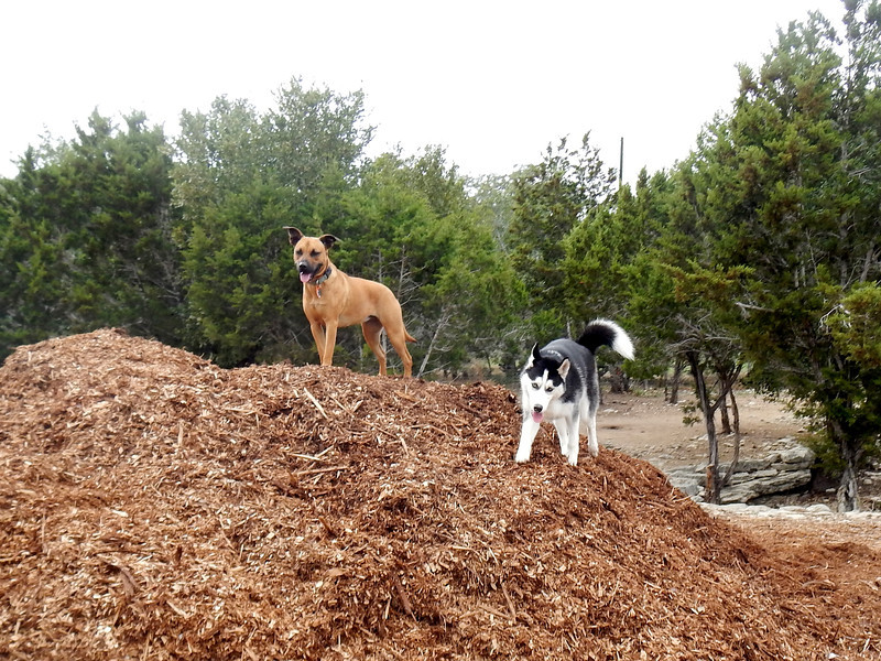 Molly H  and Kiki hanging out in the mulch