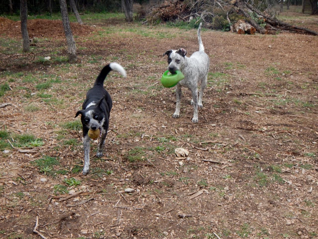 Kiko and Budra playing ball