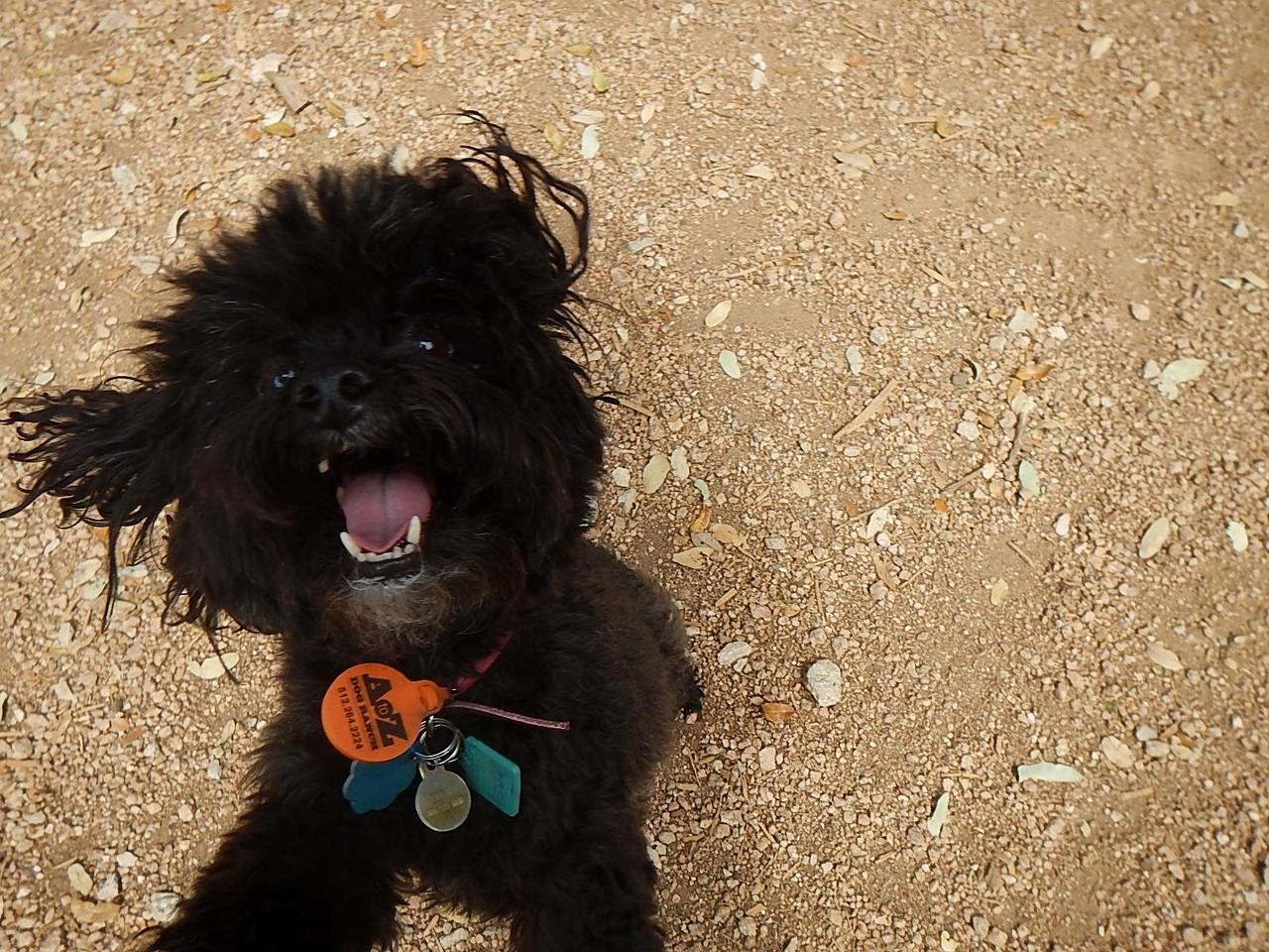 Pet me!_ Lucy J