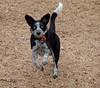 Kiko playing ball