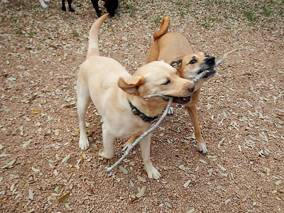 Cammy and Sophie C  sharing a stick