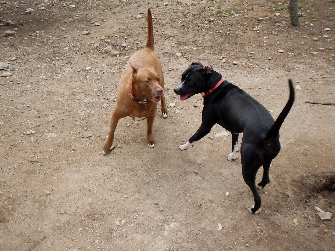 Charlie B  and Ziggy getting their play on