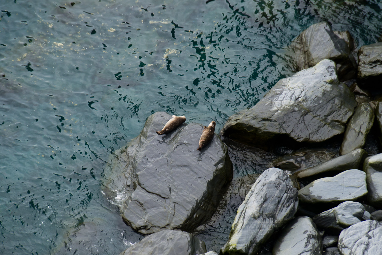 Seals - Cape Broyle Path
