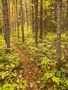Sentier à l'automne