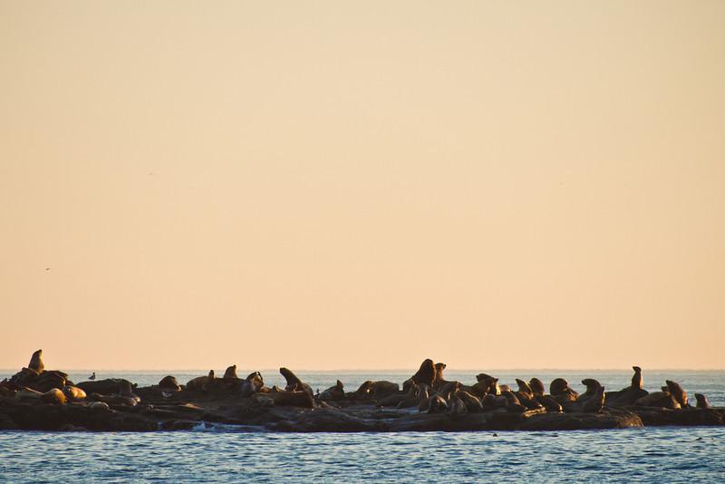 Sea Lions on the Rocks - West Coast Trail