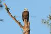 Eagle 2148