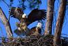Eagles 511 a