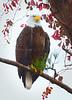 Eagle 3546 a