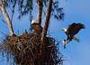 Eagle family 2965 a