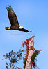 Eagle 2639