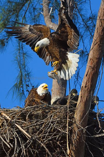 Eagle 2642 a