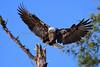 Eagle 537