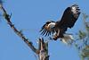 Eagle 3232