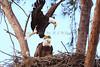 Eagles 9365