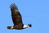 Eagle 2642