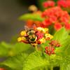 Bright Bee