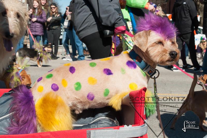Mardi-Dog Parade 2019-14