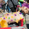 Mardi-Dog Parade 2019-14