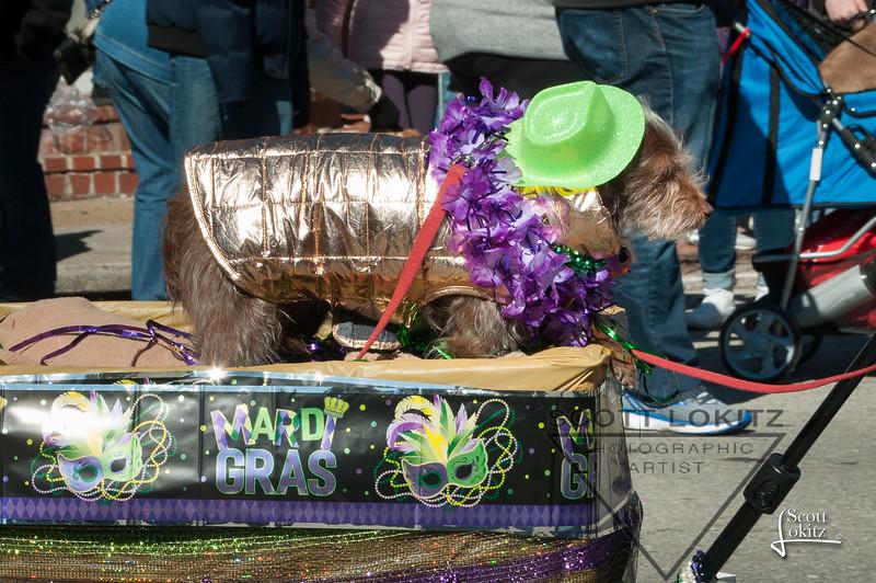 Mardi-Dog Parade 2019-15