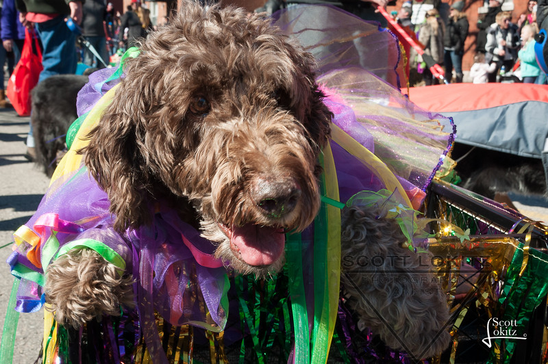 Mardi-Dog Parade 2019-21