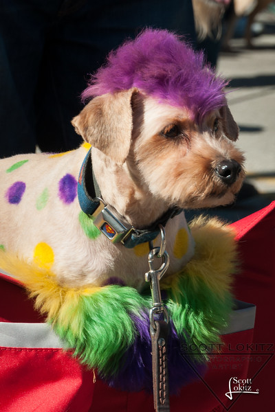 Mardi-Dog Parade 2019-13