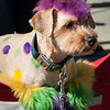 Mardi-Dog Parade 2019-13