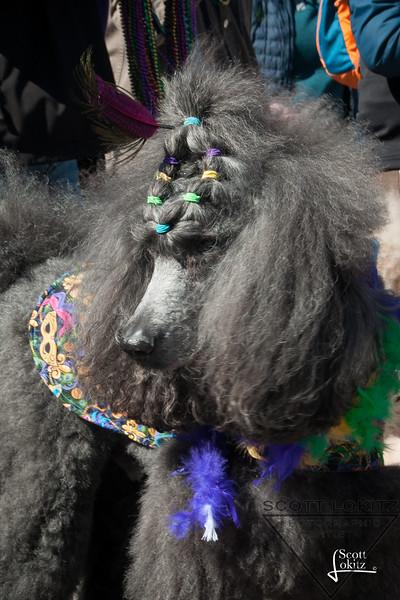 Mardi-Dog Parade 2019-17