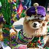 Mardi-Dog Parade 2019-30