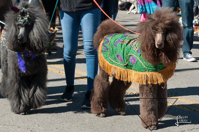 Mardi-Dog Parade 2019-16