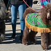 Mardi-Dog Parade 2019-16