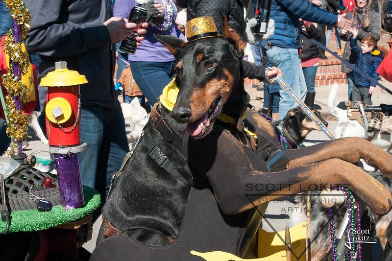 Mardi-Dog Parade 2019-12