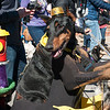 Mardi-Dog Parade 2019-12