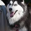 Mardi-Dog Parade 2019-32