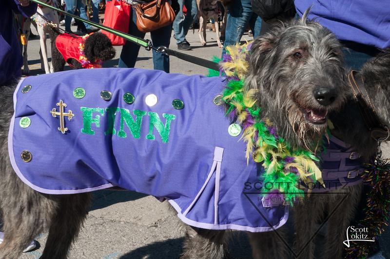 Mardi-Dog Parade 2019-18