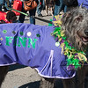 Mardi-Dog Parade 2019-18