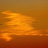 Pelican Sunset Gulf Shores AL_2234