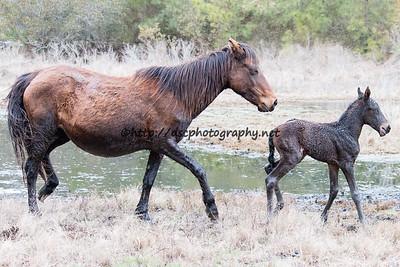 Leah's Bayside Angel's 2015 Foal