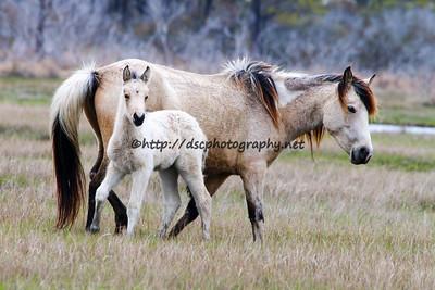 Molly Rosebud's 2015 Foal