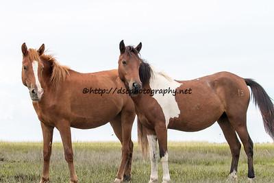 Precious Jewel & White Saddle