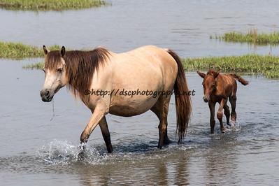 Saltwater Taffee/Too Grand's 2015 Foal