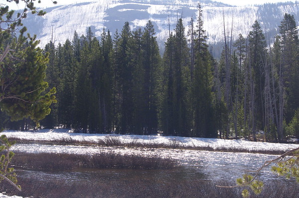 Yellowstone NP 6.05.17