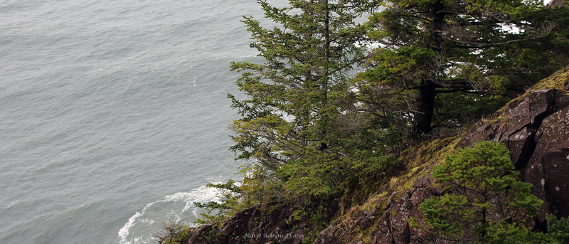 Trees and other flora cling to the rocky clifts along the Oregon Coast Highway