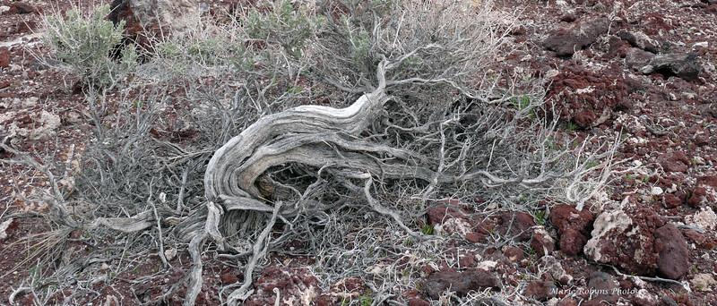 Death Valley flora