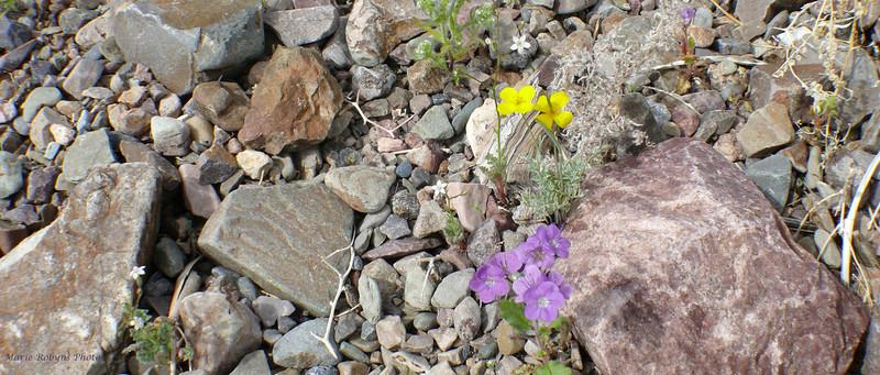 A rock garden in the desert